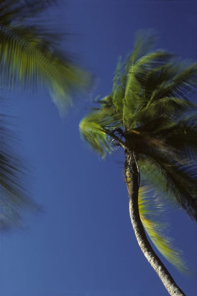 At mid-day, shoreline palm trees are agitated in very high winds.