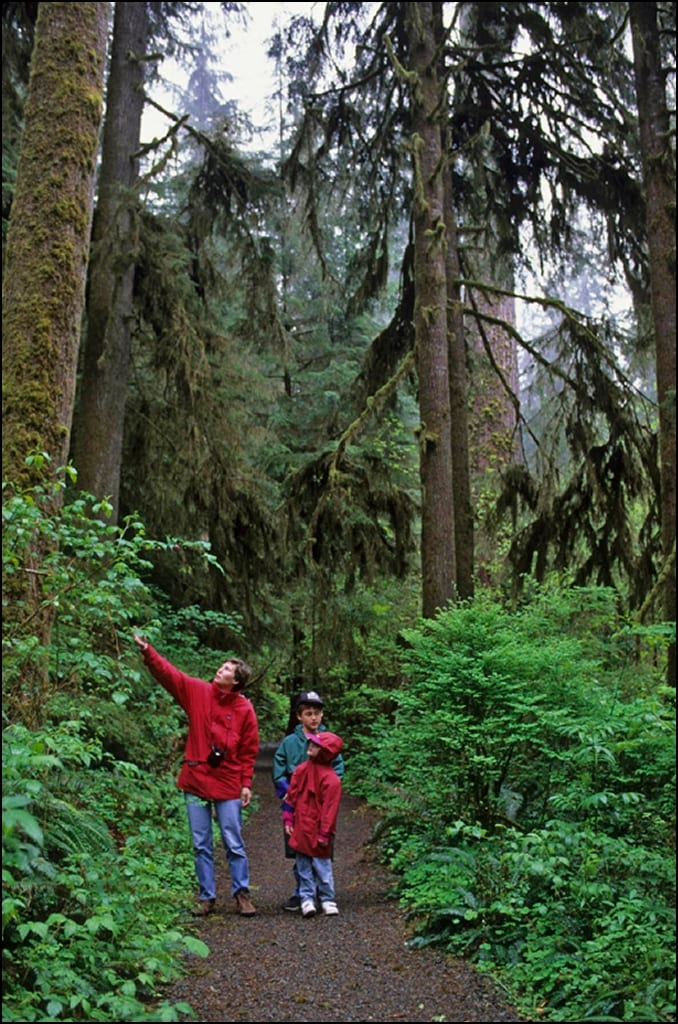USA, WASHINGTON, OLYMPIC NP, QUINAULT RAINFOREST, HIKERS (MODEL RELEASED)